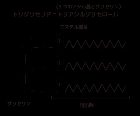 トリ アシル グリセロール 構造